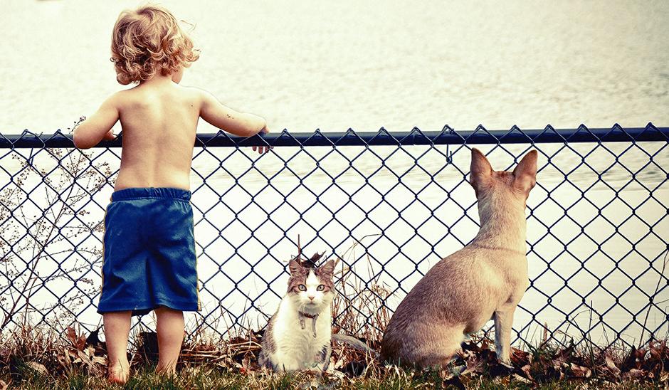 养狗带来的益处